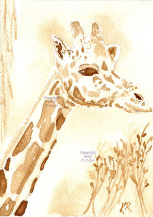 Java_giraffe_wm_3